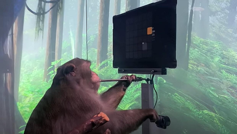 Neuralink: Makake spielt Pong mit seinen Gedanken