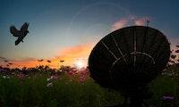 Starlink: Tauben sind offenbar ein Problem für Elon Musks Satelliteninternet