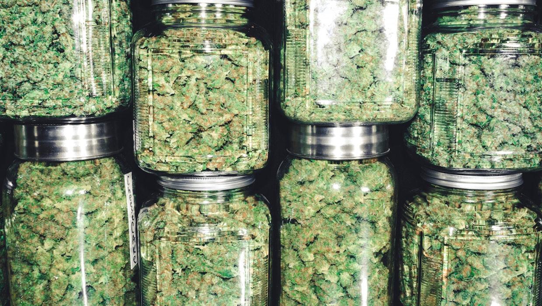Legalize it: Amazon macht in den USA Lobbyarbeit für die Legalisierung von Marihuana