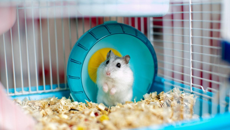 Mr. Goxx: Hamster handelt mit Kryptowährungen und ist erfolgreicher als S&P 500